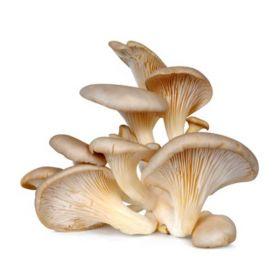 Le selezioni P&V Funghi pleurotus sfusi